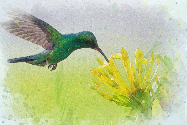 watercolor hummingbird green yellow flower