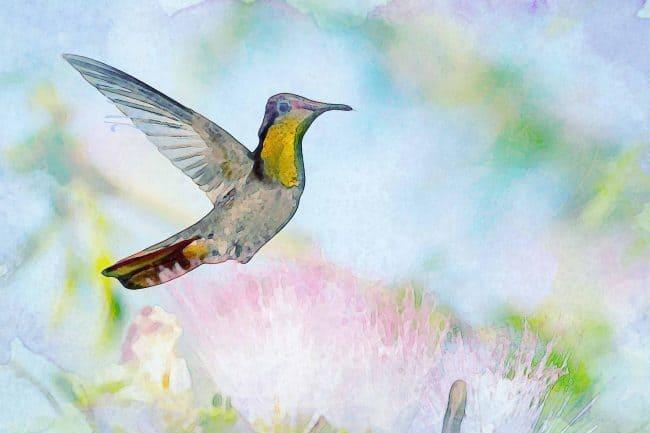 watercolor hummingbird pink yellow flower