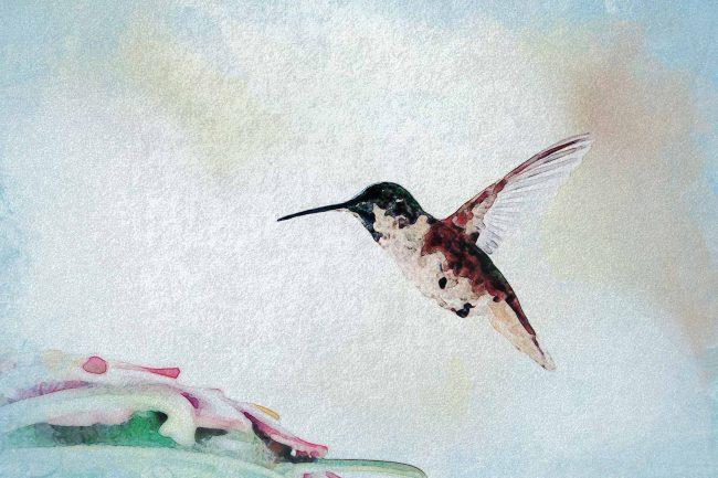 watercolor hummingbird white red green
