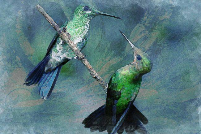 watercolor hummingbirds blue green white