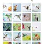 watercolor hummingbirds hdr