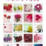 watercolor roses hdr
