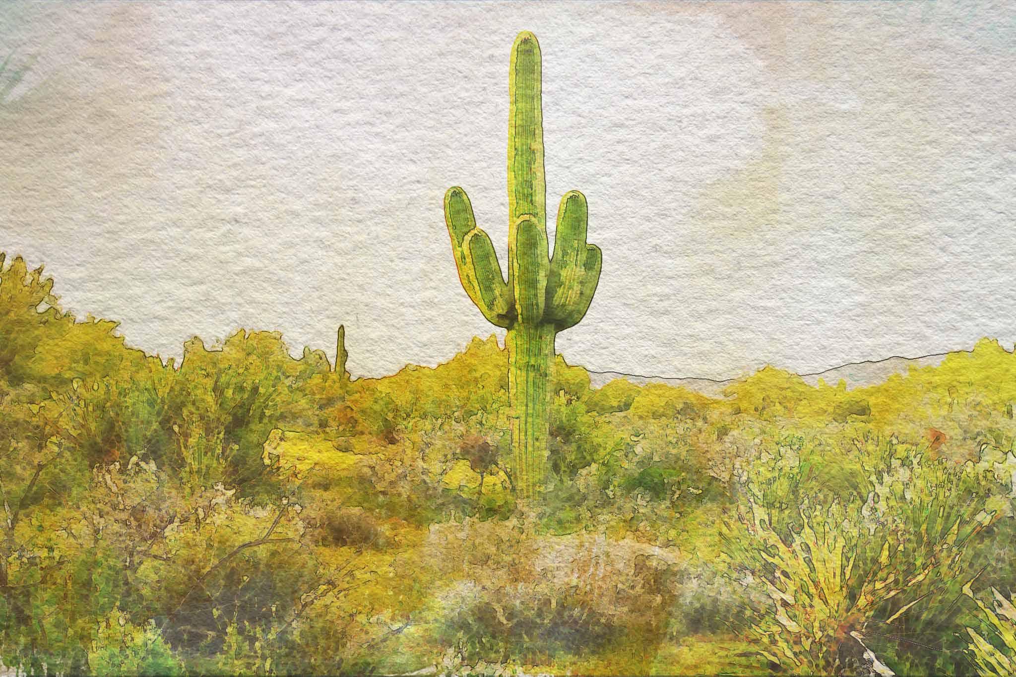 watercolor sagauro cactus