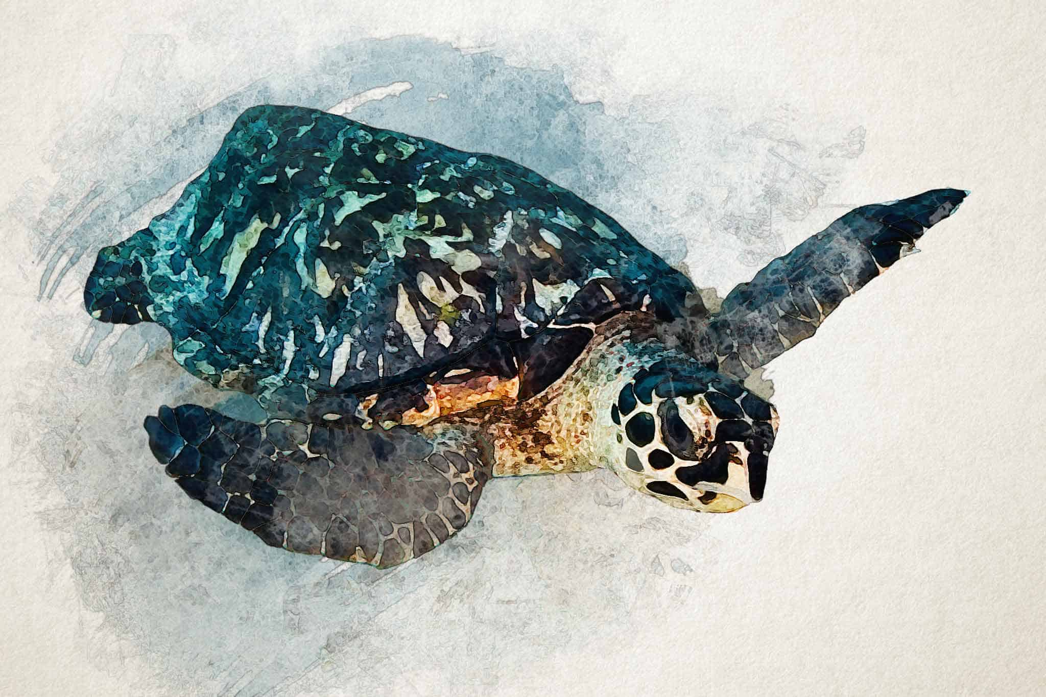 watercolor turtle blue green swiming