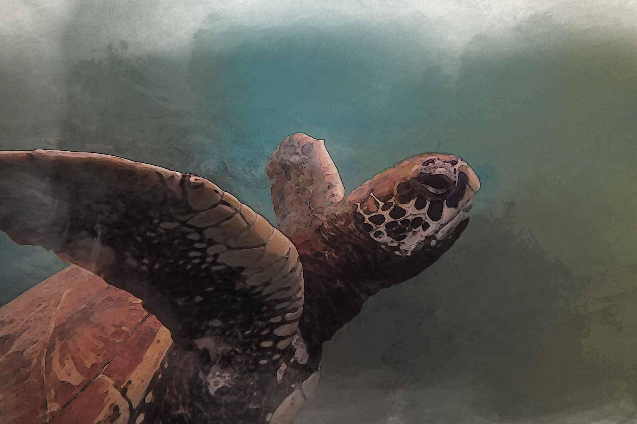 watercolor turtle blue purple