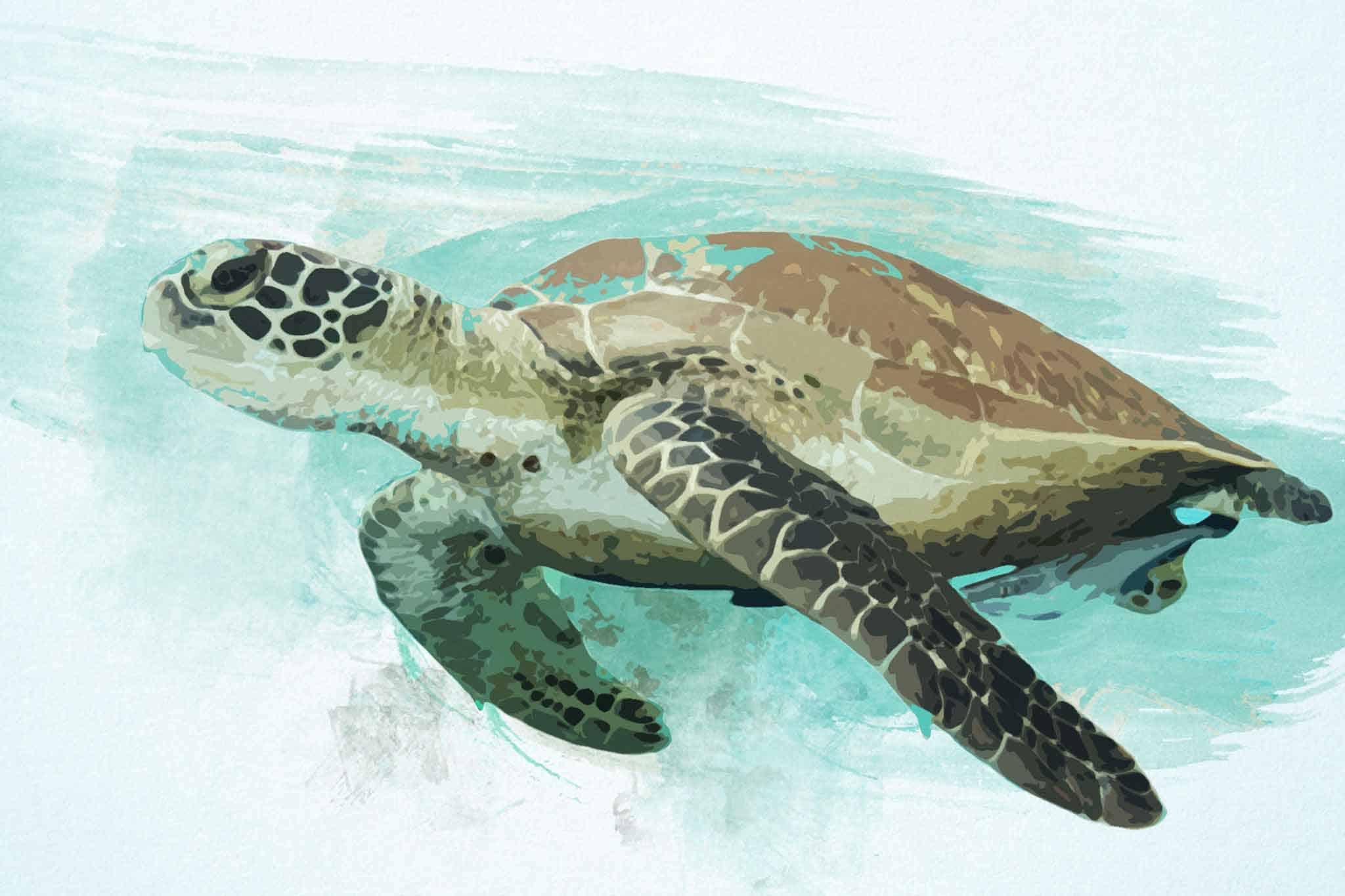 watercolor turtle blue slider swim