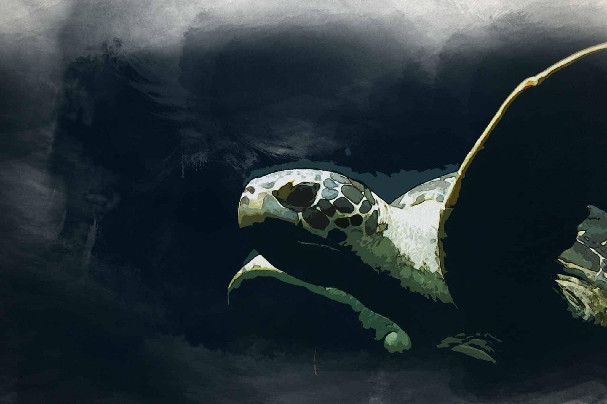 watercolor turtle blue slider