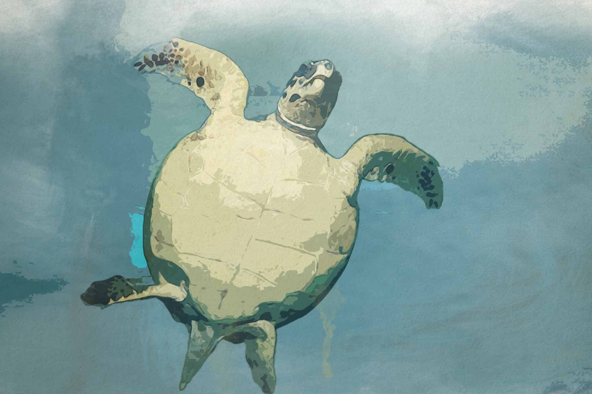 watercolor turtle blue up side down