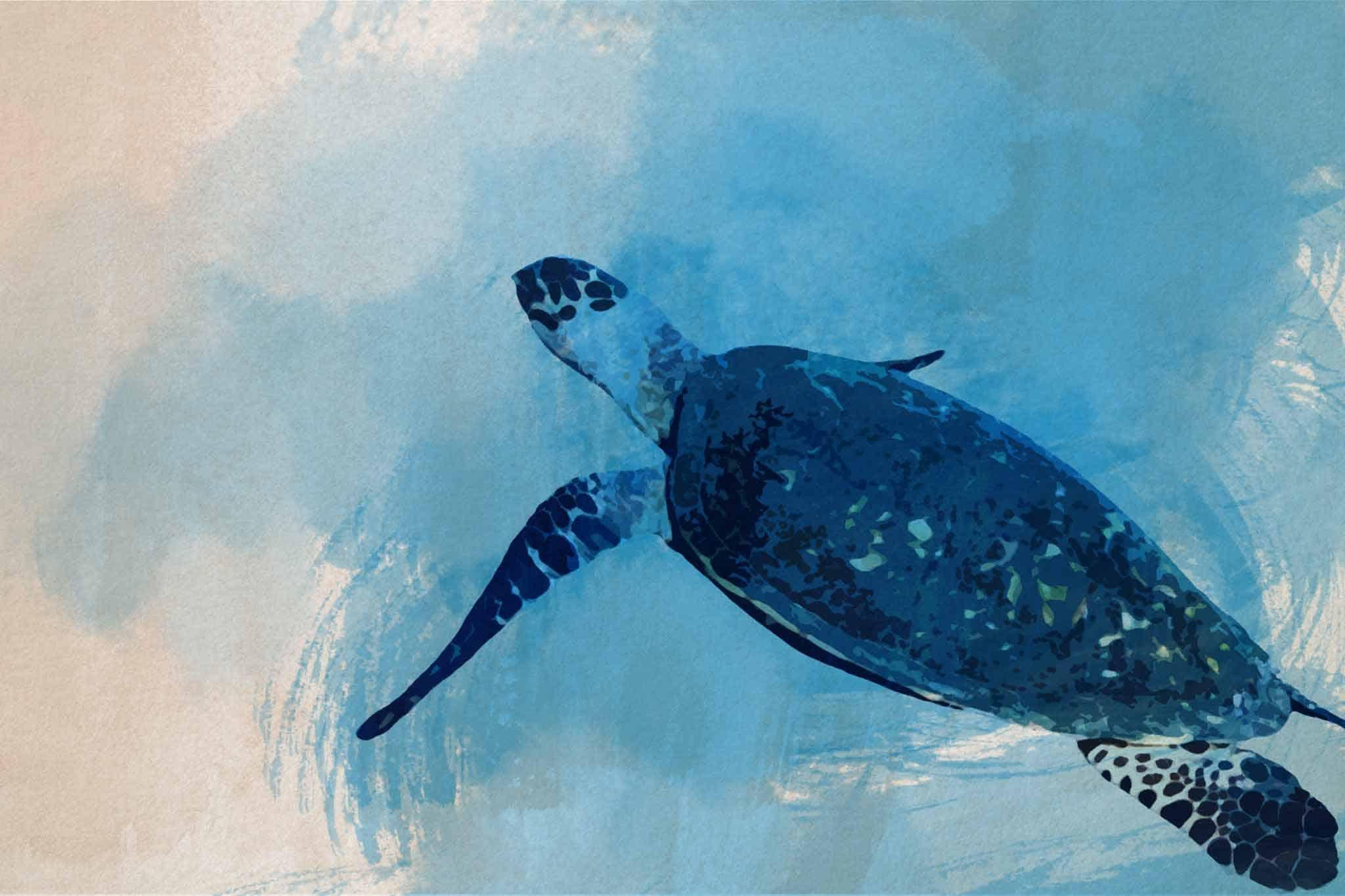 watercolor turtle blue