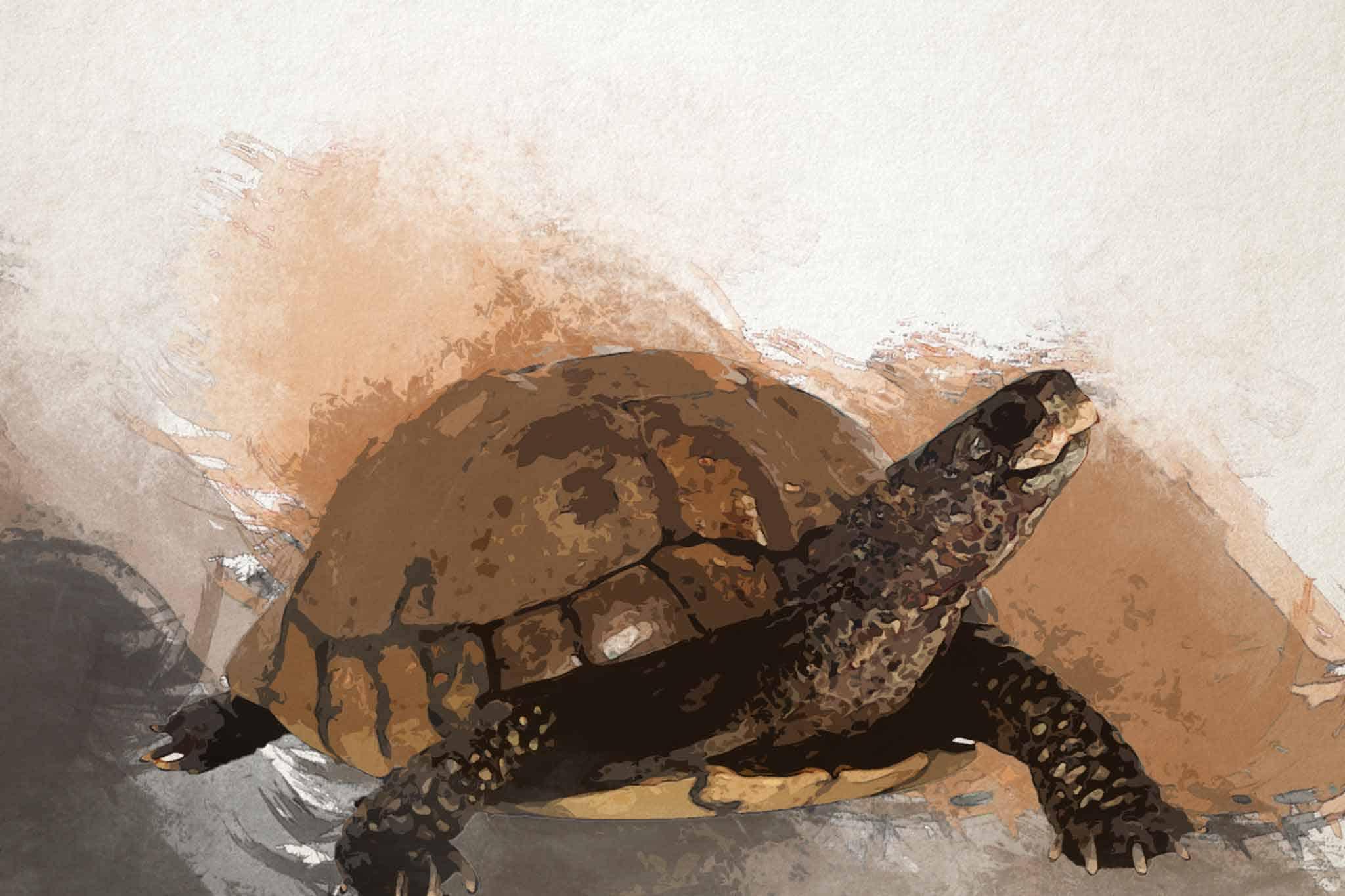 watercolor turtle brown slider