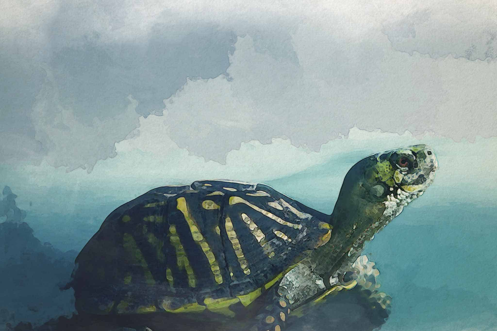 watercolor turtle brown yellow