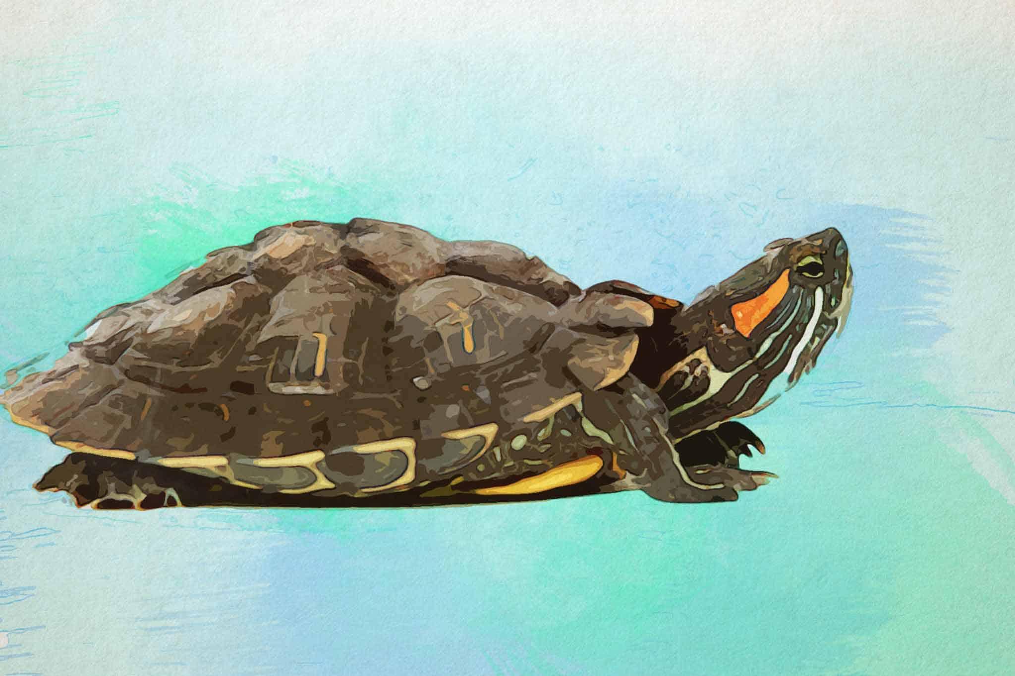 watercolor turtle green blue brown