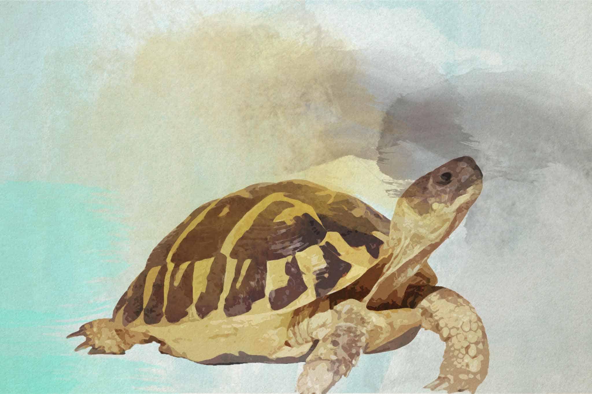 watercolor turtle green bluer