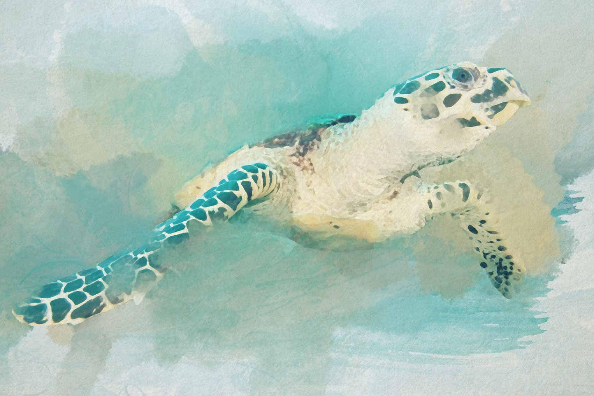 watercolor turtle green brown