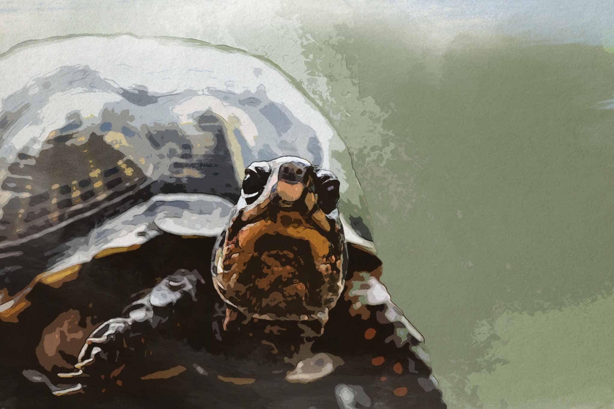 watercolor turtle green slider