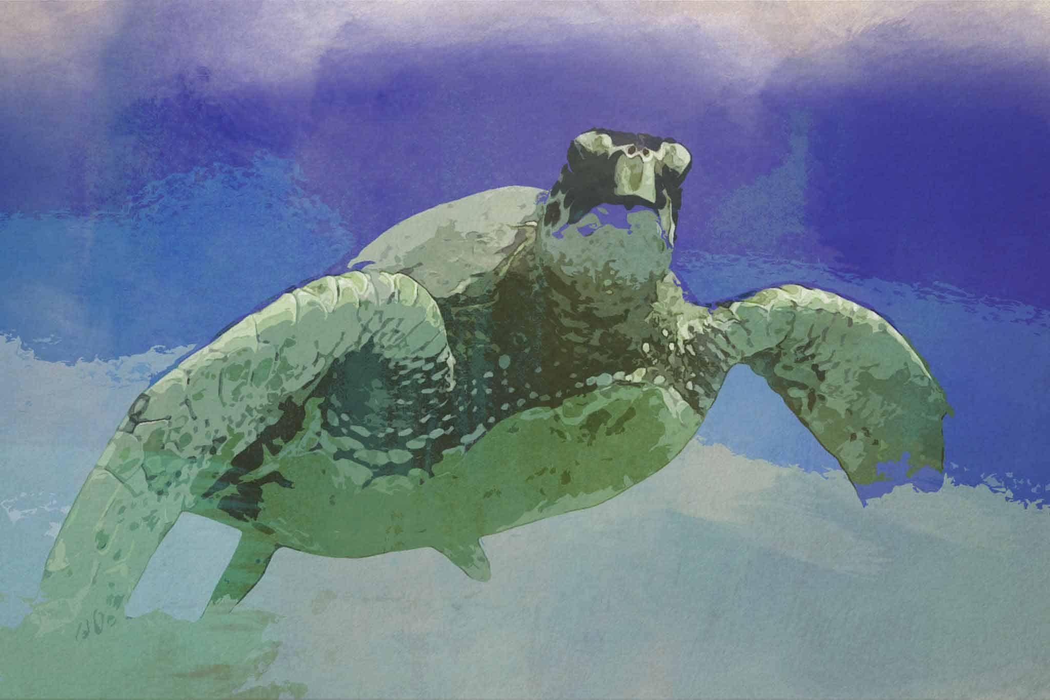 watercolor turtle green under see