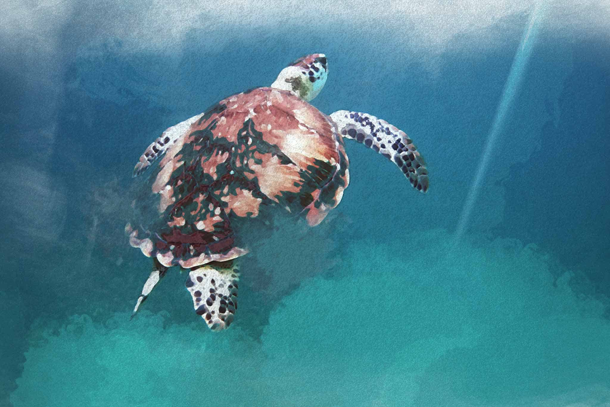 watercolor turtle red blue