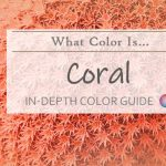what color is coral hdr