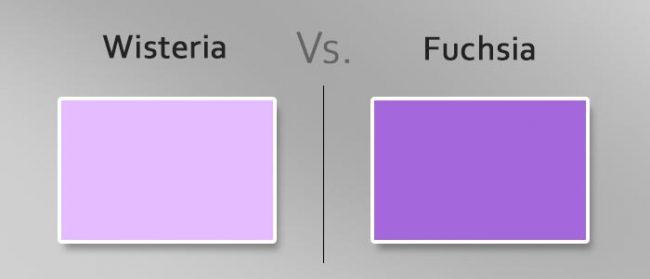 wisteria vs fuchsia